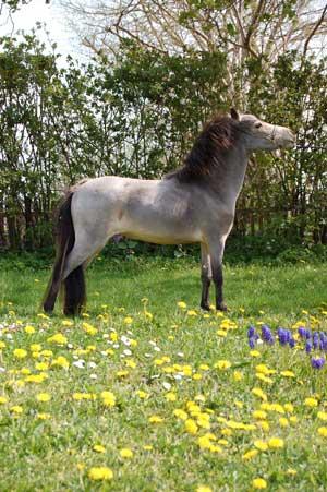 hästens färger genetik