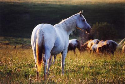 dräktighet häst månad för månad