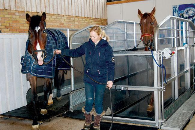 knulla med häst spa i helsingborg