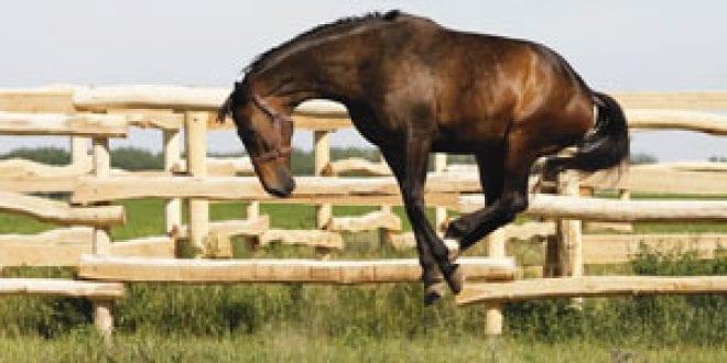 lös avföring hos häst