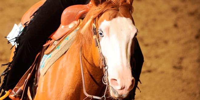 ställa hästen inåt