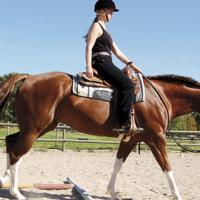 Trail – Mera övningar och dags för tävling
