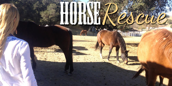 Horse Rescue – Hollywood, Los Angeles