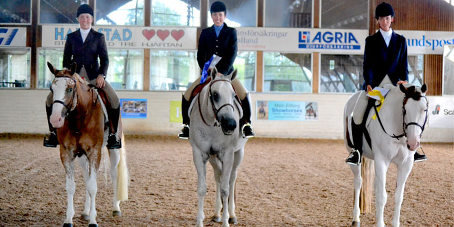 Nordic Paint Horse Challenge