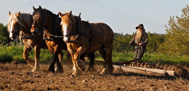 Hästmannen i repris