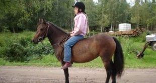 Ponnytiden- den värsta eller bästa perioden?