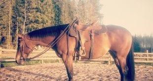 Koträning och glada hästar.