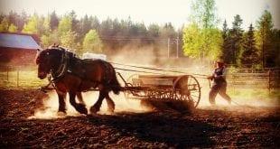 Vårbruka med häst