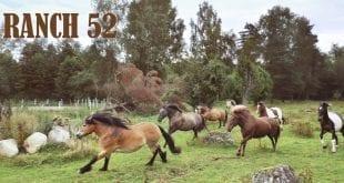 luckyrider_ranch52-1_westernridning