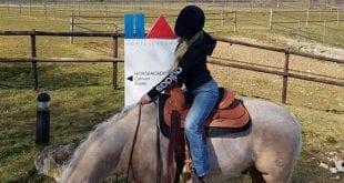 Hästar och rutiner