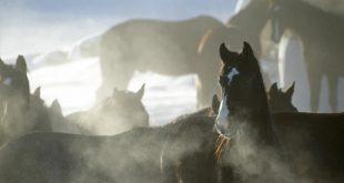 juverinflammation häst symptom